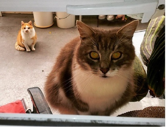 Just this past week - 10th to the 13th of March I was in Tokoroa doing a round visit before I leave and caught these two at the kitchen window before dinner time. Fluff and Ginge :)