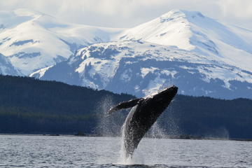juneau-shore-excursion-whale-watching-cruise-and-tracy-s-king-crab-in-juneau-183361